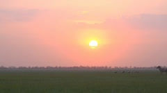 Steppe sunset with asiatic wild ass kulan Stock Footage