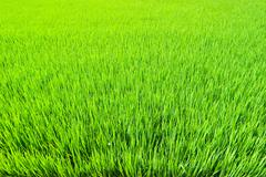 fresh grass land - stock photo