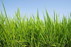 Fresh grass land under blue sky Stock Photos