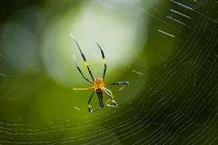spider and web with green background - stock photo