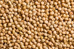 the pattern of chickpeas - stock photo