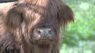Stock Video Footage of Scottish Highlanders