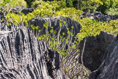 tsingy of ankarana madagascar - stock photo