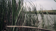 Stock Video Footage of fishing pond