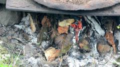 Firewood burn smokehouse Stock Footage
