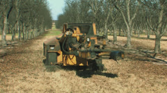 Pecan harvest 1 Stock Footage