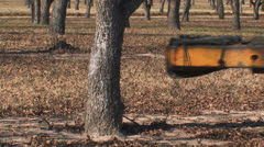 Pecan harvest 3 Stock Footage