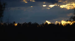 Stock Video Footage of sunset over pine forest edge
