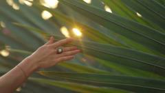 Female hand holding green palm tree at sunset - stock footage