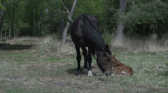 Horse with baby in wood Stock Footage