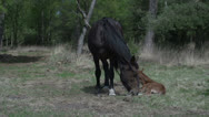 Stock Video Footage of Horse with baby in wood