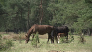 Stock Video Footage of Horse family in the wood