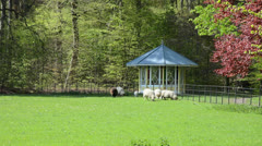 Sheep resting on a field in front of gazebo Stock Footage