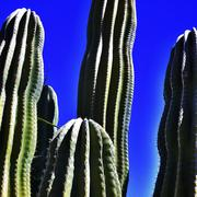 Close up of cactus plants Stock Photos