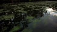 Osc1 02 reflection sky bayou Stock Footage