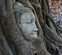 Root covers buddha's head - stock photo