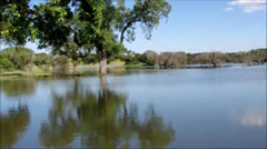 Trees in Lake Stock Footage