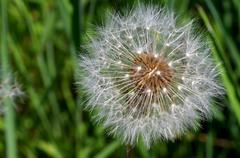 seeds - stock photo