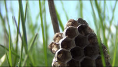 Stock Video Footage of honeycombs on the grass