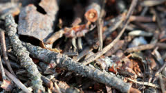 A group of ants, working at their anthill. Stock Footage