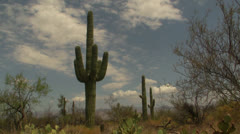 Giant Cactus Time Lapse Stock Footage