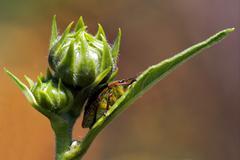 hemiptera inside a flower - stock photo