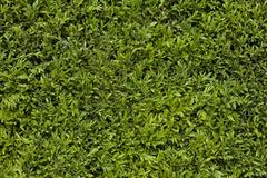 green leafy background - stock photo
