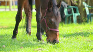 Horse Stock Footage