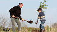 Stock Video Footage of Father and son planting a tree.