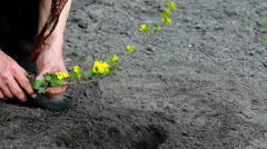 Hands planting a tree Stock Footage