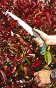 That pruning saw Stock Photos