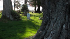 Cemetery in the trees Stock Footage