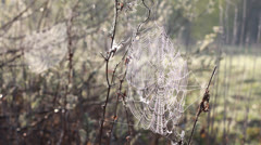 Spider net with water drops Stock Footage