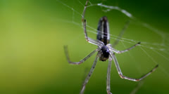 Macro Madness - little Spider extreme close up Stock Footage