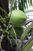 Stock Photo of coconut