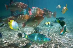 shoal of colorful tropical fish in belize - stock photo