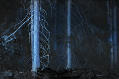 Spooky blue forest Stock Photos
