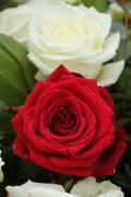 red rose in bridal arrangement - stock photo