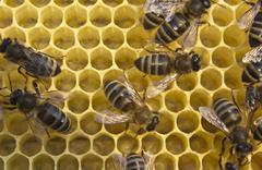 Bees build honeycombs Stock Photos