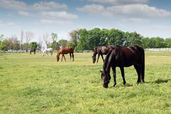 Herd of horses grazing ranch scene Stock Photos