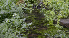 Small transparent river Stock Footage