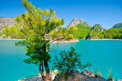 Small green tree against the azure waters of a mountain lake Stock Photos