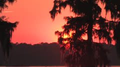 osc1 08 sunset reveal cypress top - stock footage