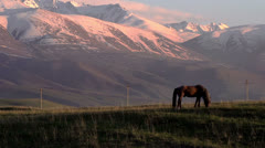 Horses Country HD Stock Footage