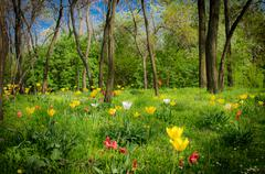 mystic forest with flowers - stock photo