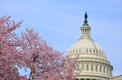 US Capitol in cherry bloom Stock Photos