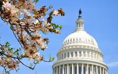 Stock Photo of US Capitol in magnolia bloom