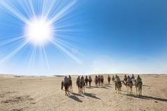 Sahara desert with sun and tourists Stock Photos