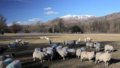 Sheep below the Old Man of Coniston Stock Footage