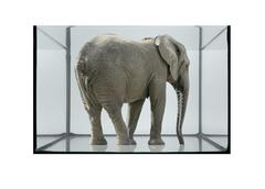 Fish tank and elephant Stock Photos